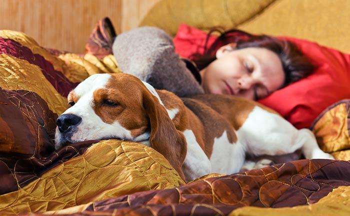 Letto s o letto no per il cane dogdeliver - Quando fare il primo bagno al cane ...