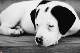 10 cose tenerissime che fanno i cani