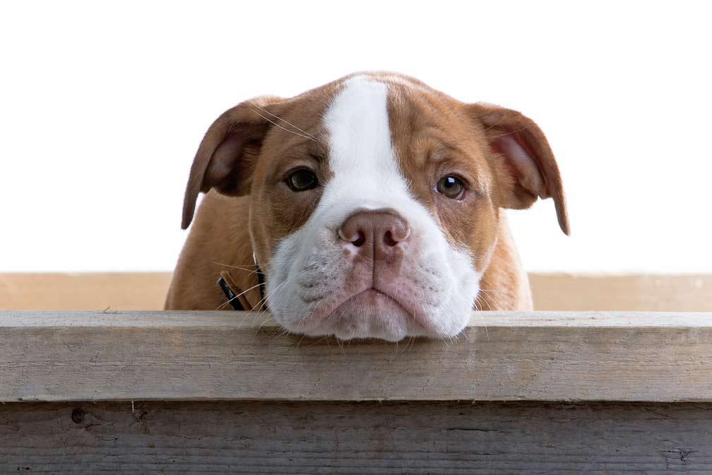 (quasi) tutte le cose disgustose che fanno i cani hanno un motivo