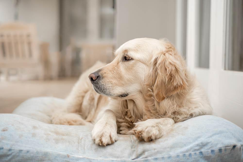 Come gestire al meglio il cane da solo a casa: intervista a Cinzia Stefanini