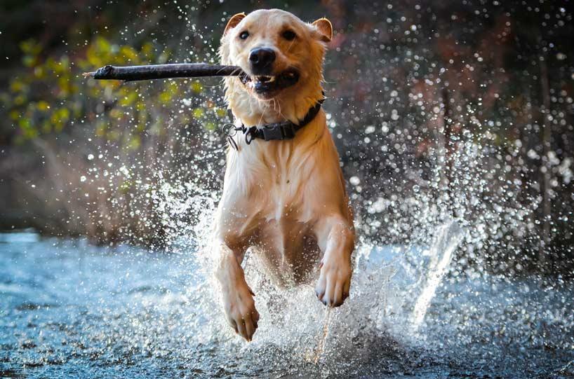 Perchè è importante giocare con il proprio cane