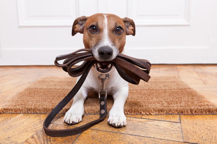 8 razze di cani di piccola e media taglia diverse da come si pensa
