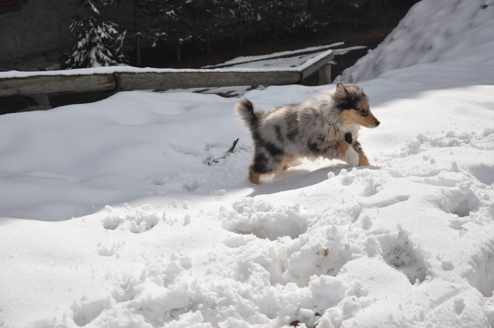 Perchè i cani amano tanto la neve