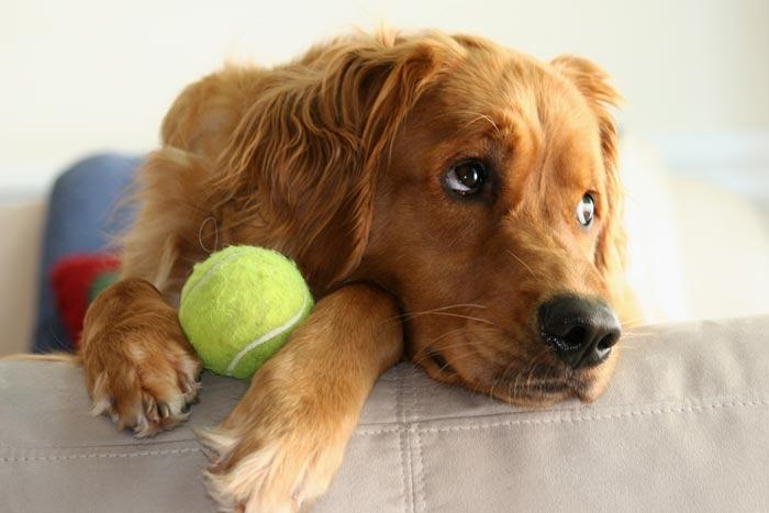Come imparano i cani: la generalizzazione