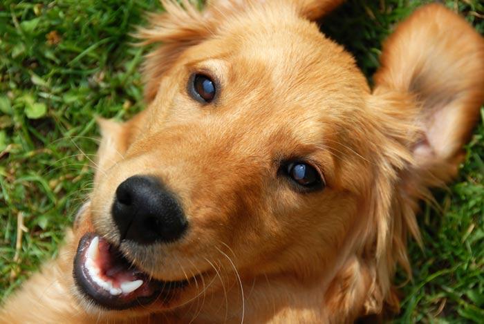 Risultati immagini per cane bello