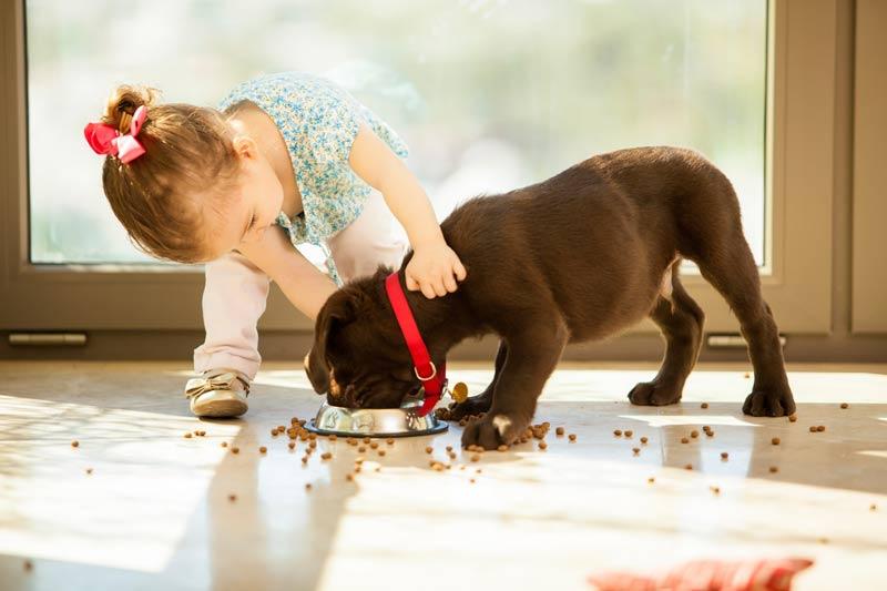 Letti A Baldacchino Per Cani : Alberghi veramente pet friendly dogdeliver