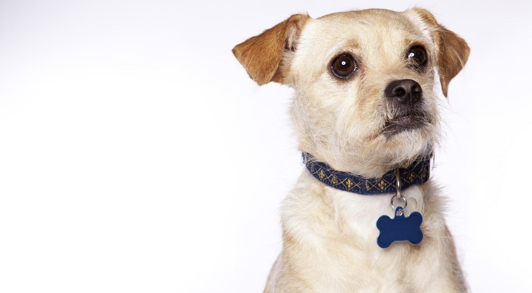Cani di cortile o cani abbandonati?