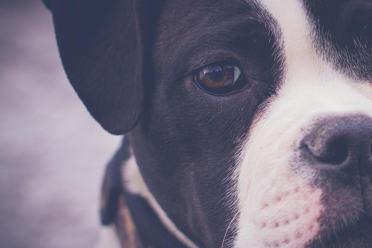 Vedere la vita dal punto di vista dei cani