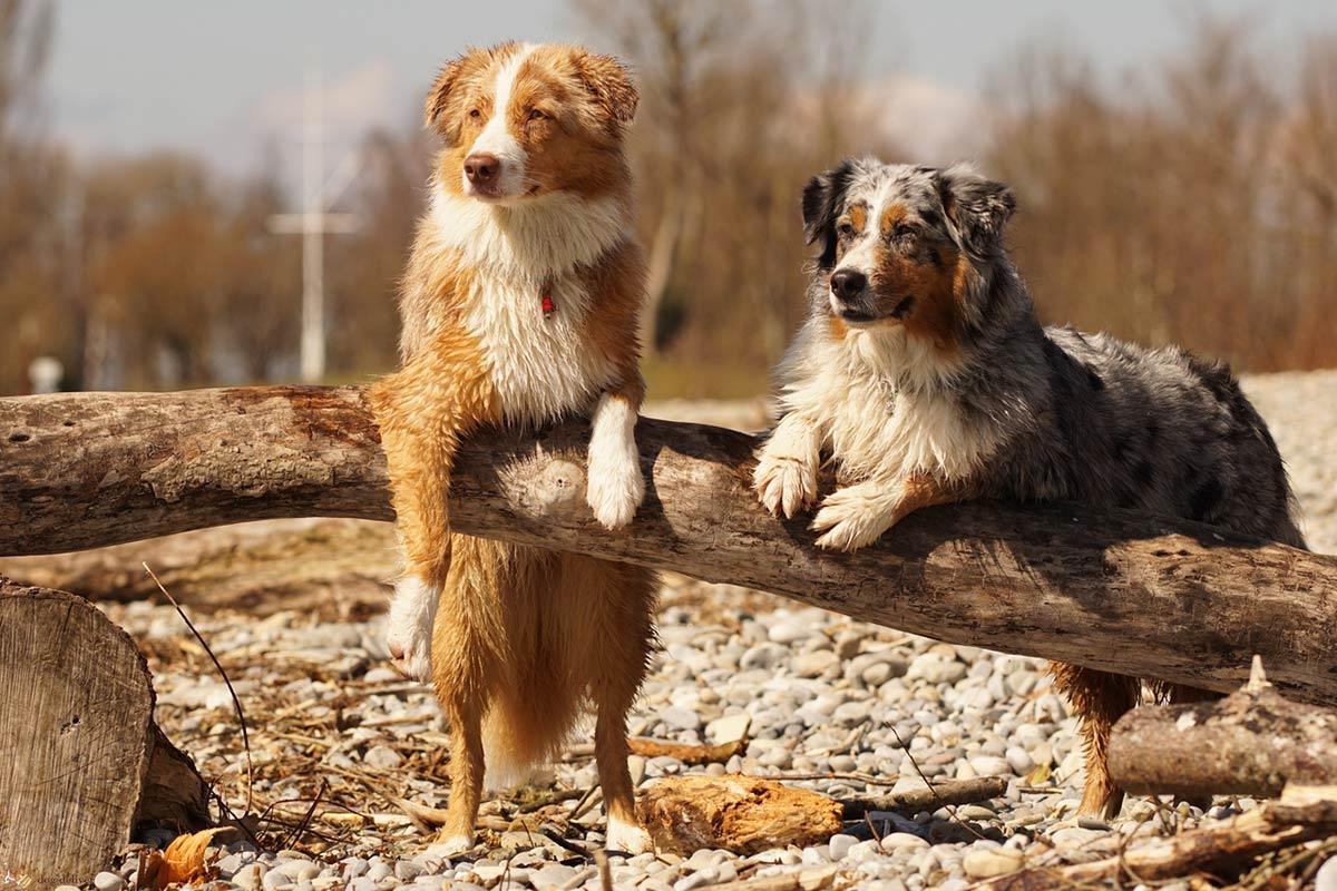 11 razze di cane, le loro caratteristiche e le realtà dei proprietari