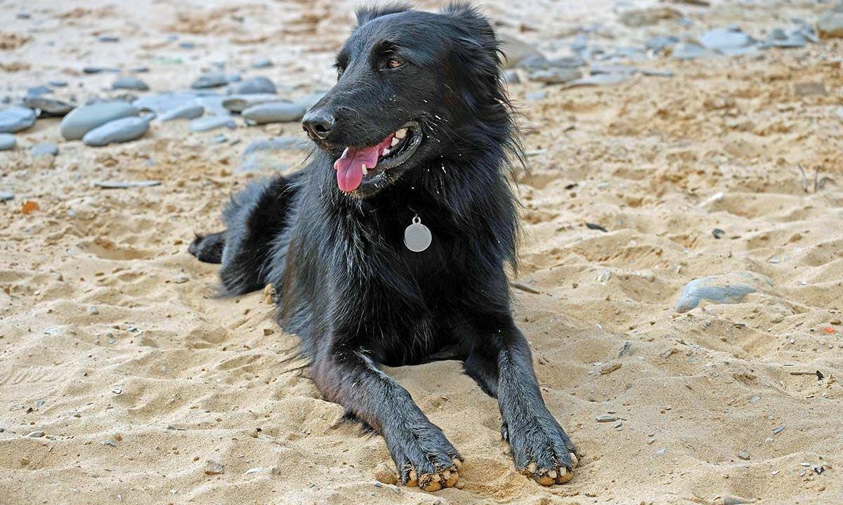 I Cani E Lestate 7 Cose A Cui Fare Attenzione Dogdeliver