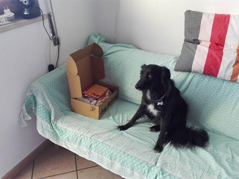 La Dogdeliver box di agosto