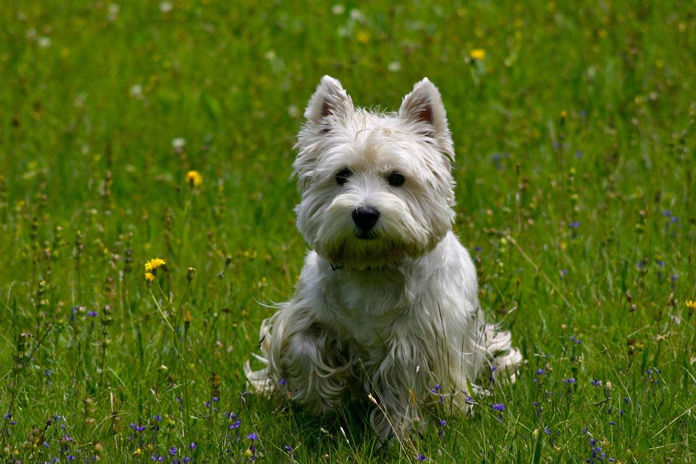 Super 6 motivi perchè i cani piccoli sono meglio dei grandi | DogDeliver MN05