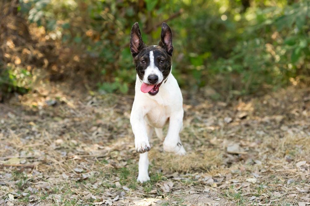 7 errori comuni che si fanno con i cani