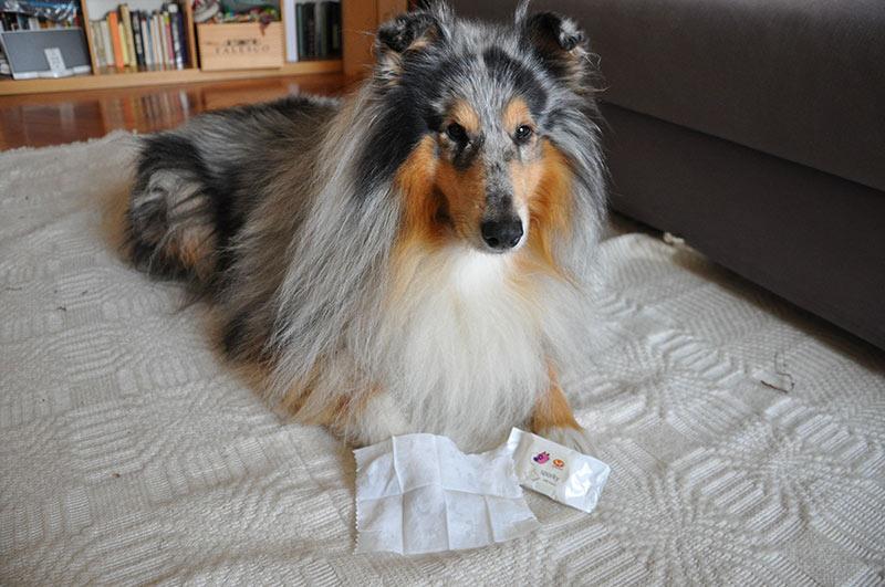 I test di Nina e Oban: Sporky di United Pets