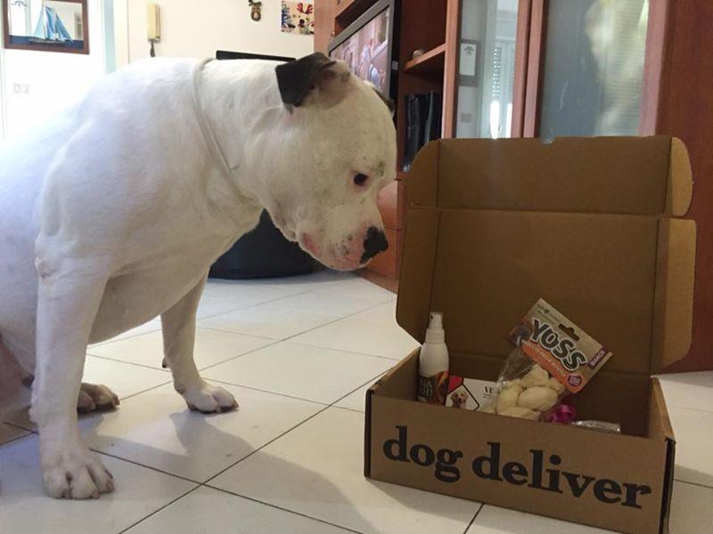 La Dogdeliver box di settembre