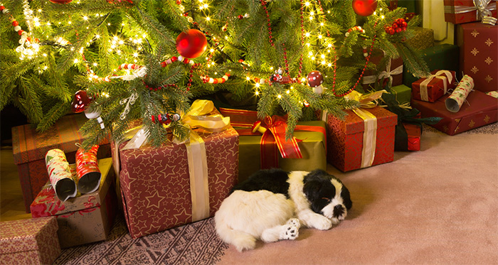La Super Offerta di Natale di DogDeliver!