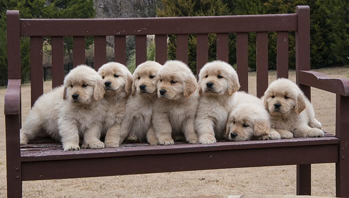 100 Idee Di Nomi Per Cani Maschi Dogdeliver