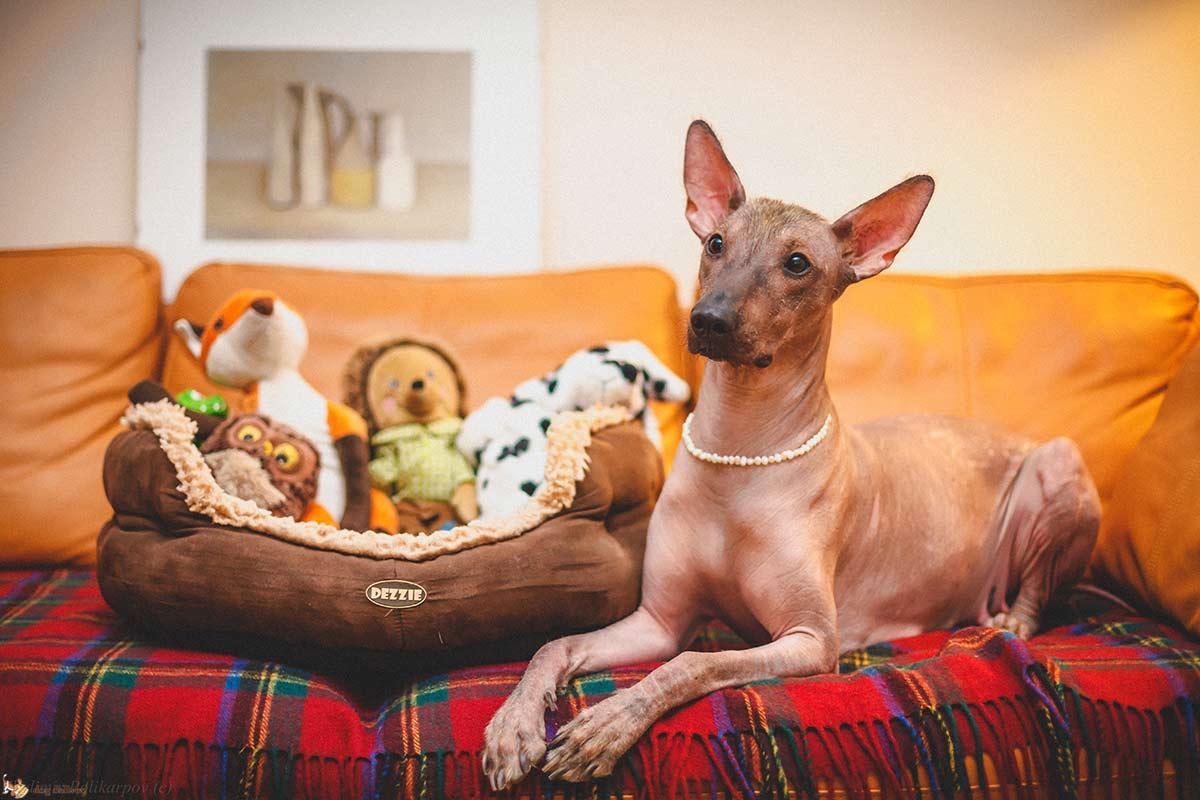 Le orecchie dei cani: un organo prodigioso
