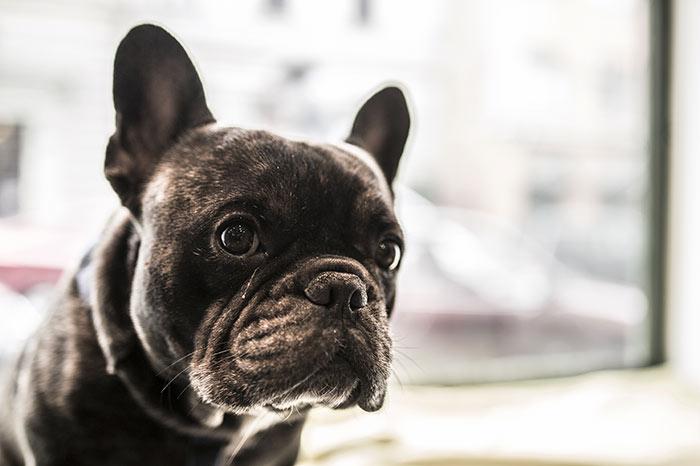 Le 6 domande che si deve fare chi pensa di prendere un cane