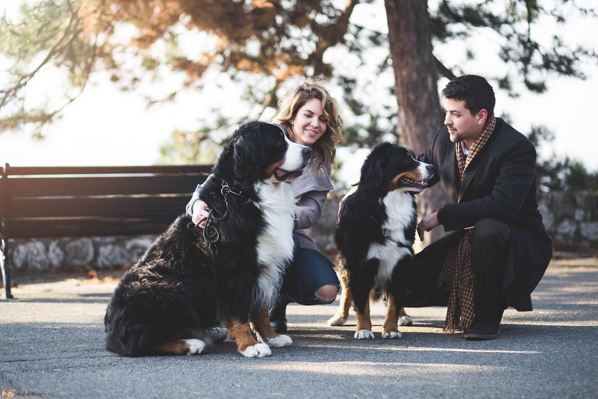 Come gestire al meglio l'incontro tra due cani