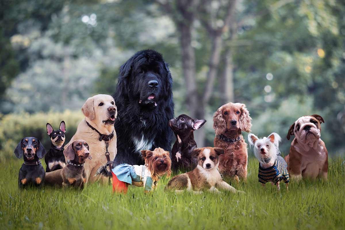 Barzelletta sui cani