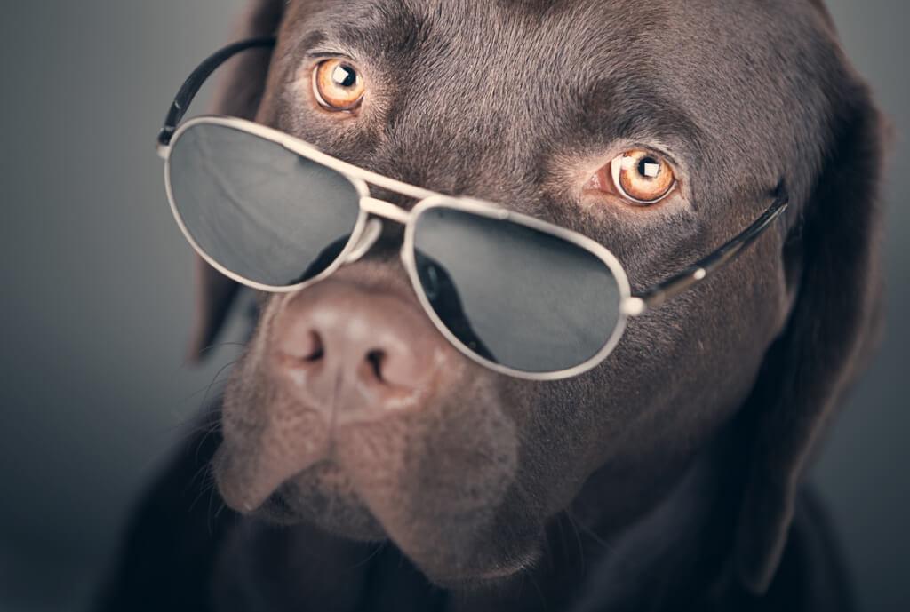 La vista dei cani