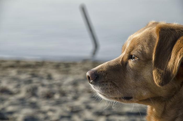 Quali sono le parole più usate per parlare con il cane
