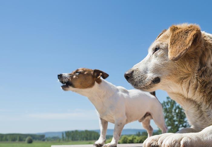 I cani e il caldo