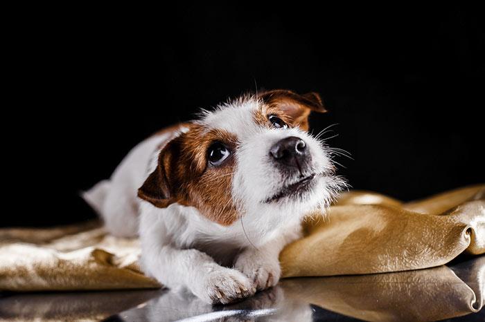Capire il ringhio dei cani