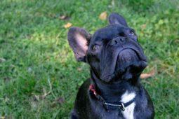 Come farsi ascoltare dal cane