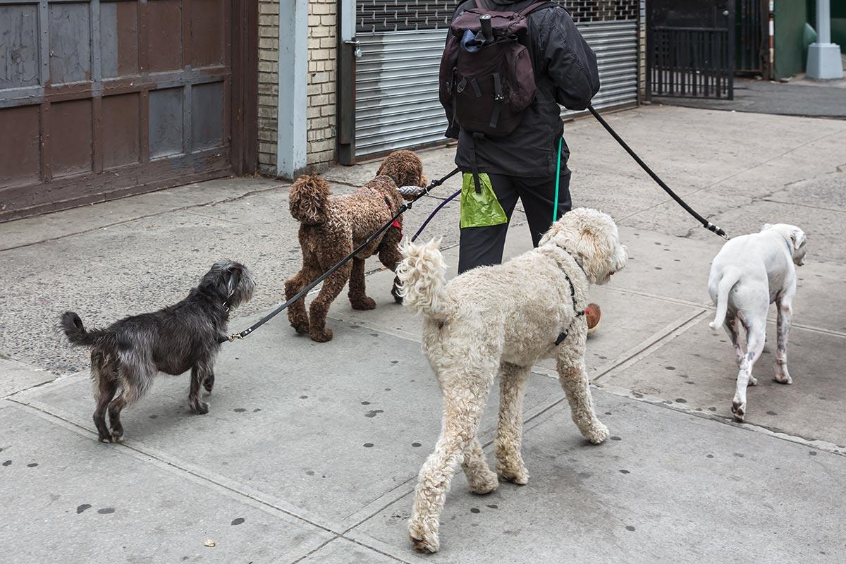 Un comportamento da evitare: giudicare i cani degli altri