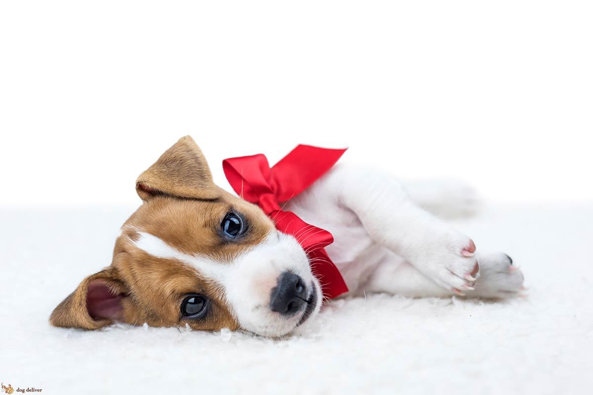 10 cose da non fare con i cani