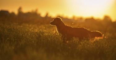 7-cose-da-non-fare-con-i-cani