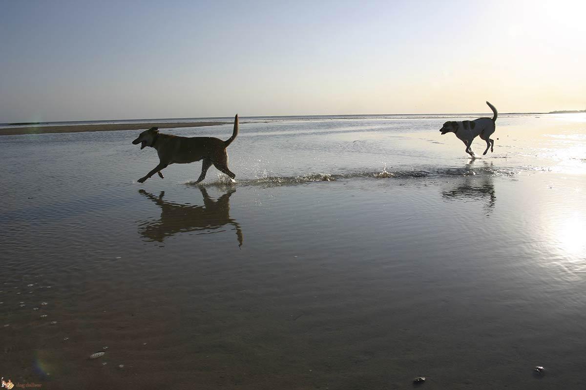 Il cane al mare: 7 cose a cui fare attenzione