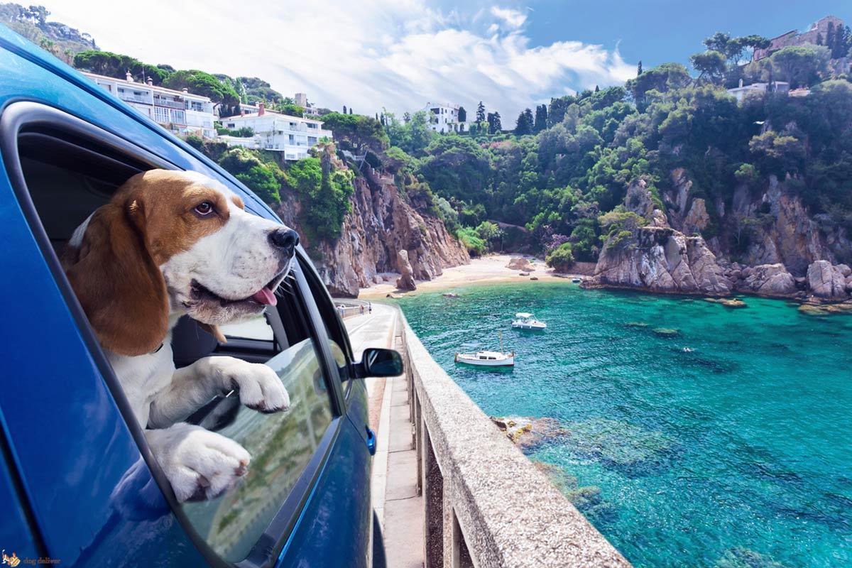Il Kit Vacanza per il Cane