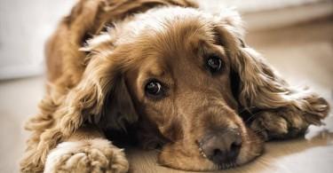l'amore-dei-cani