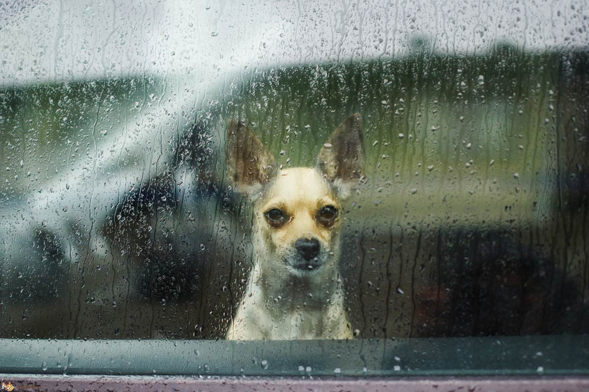 La depressione nei cani