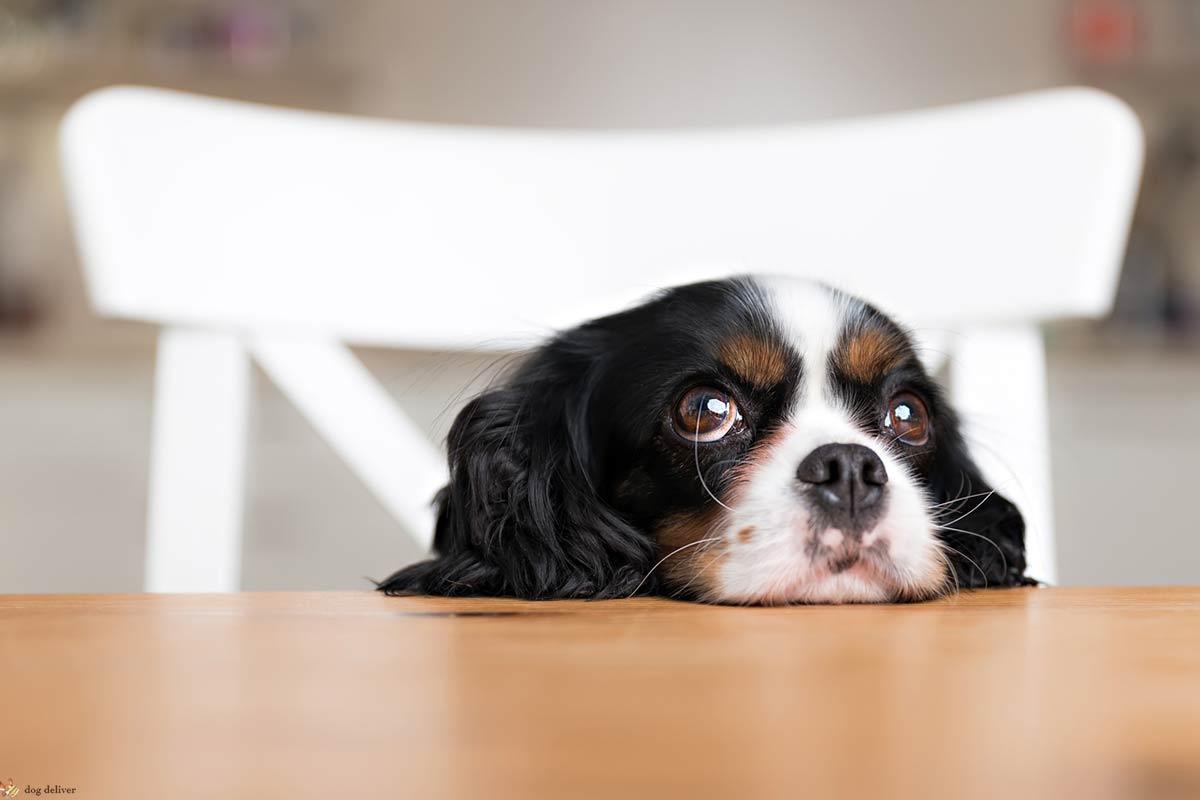 Psicologia: i cani fanno bene agli umani