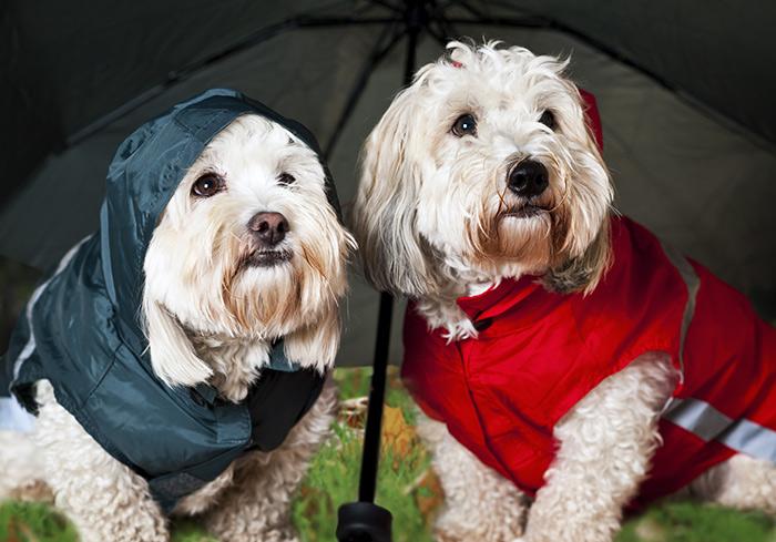 umanizzare-i-cani2