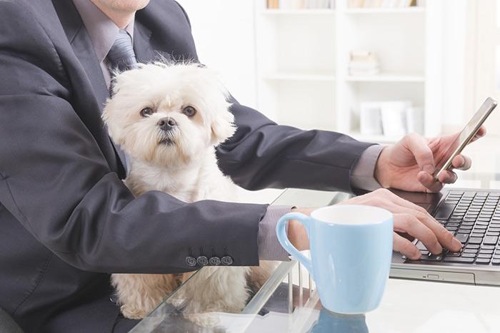 umanizzare-i-cani4