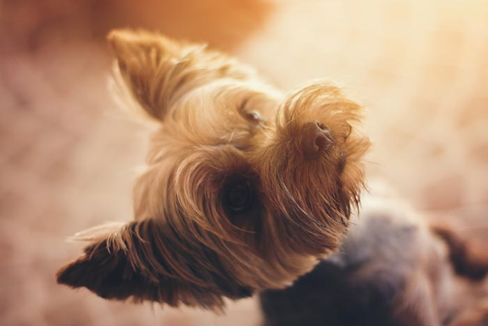 cane-non-ascolta3