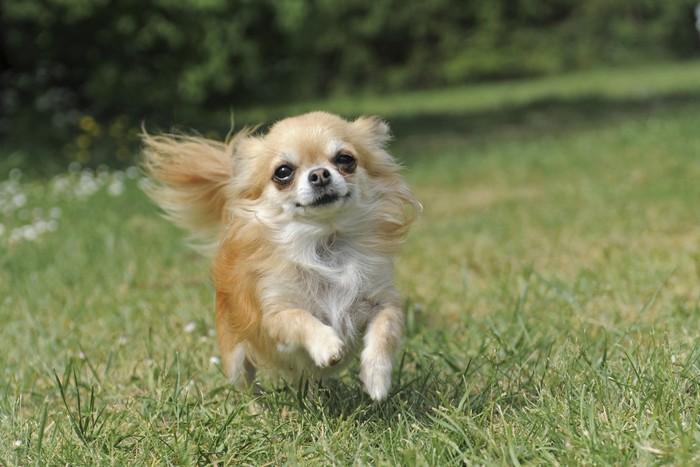 Estremamente I cani piccoli sono più aggressivi | DogDeliver QC29