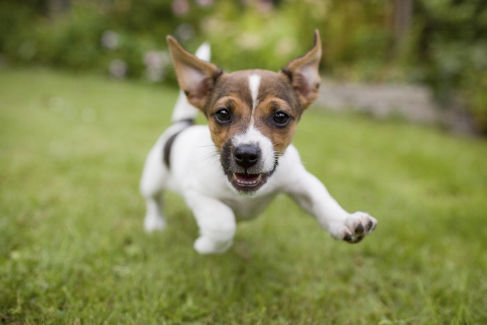 Souvent I cani piccoli sono più aggressivi | DogDeliver EU42