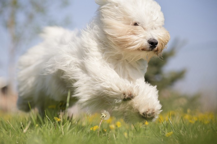 Top I cani piccoli sono più aggressivi | DogDeliver BP75