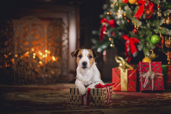 Cani e natale 9 cose a cui fare attenzione dogdeliver for Animali a natale