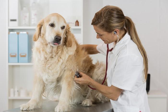 Cane stressato durante una visita dal veterinario