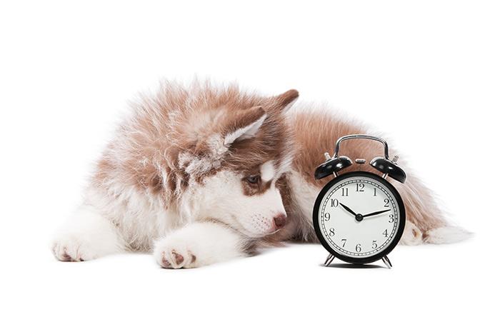 Il senso del tempo nei cani