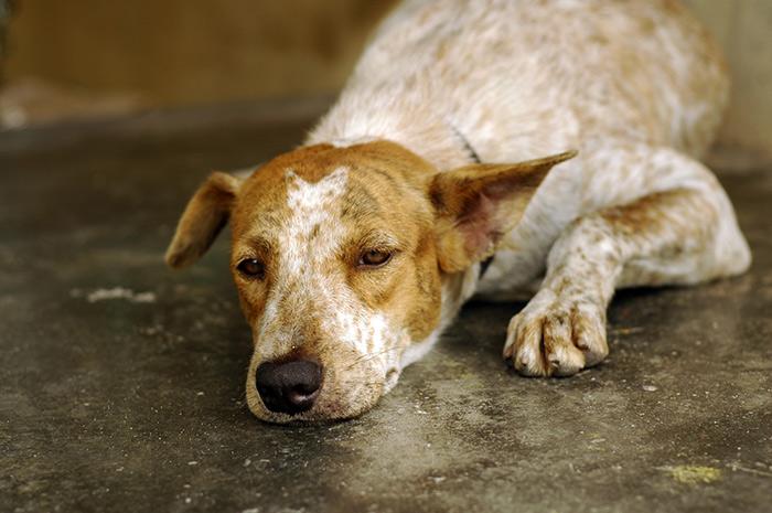 Cosa causa lo stress nei cani