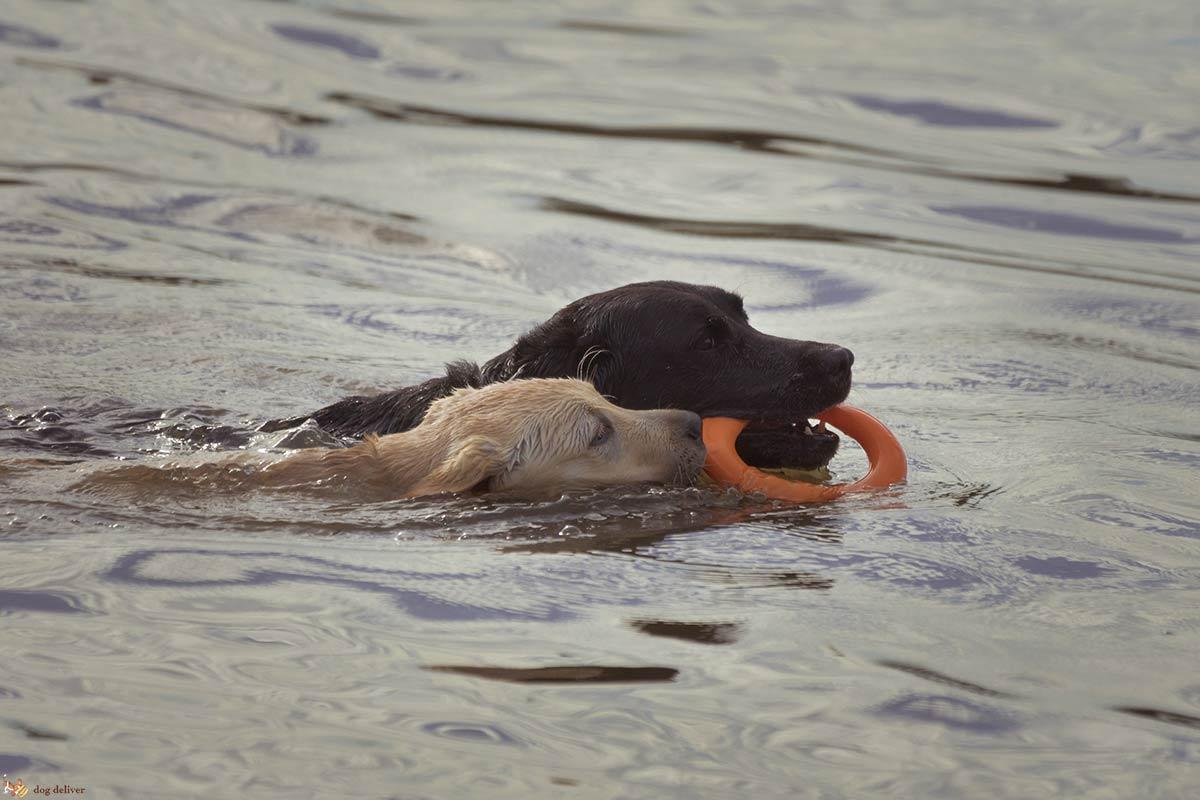 Cosa fare per stimolare la mente dei cani