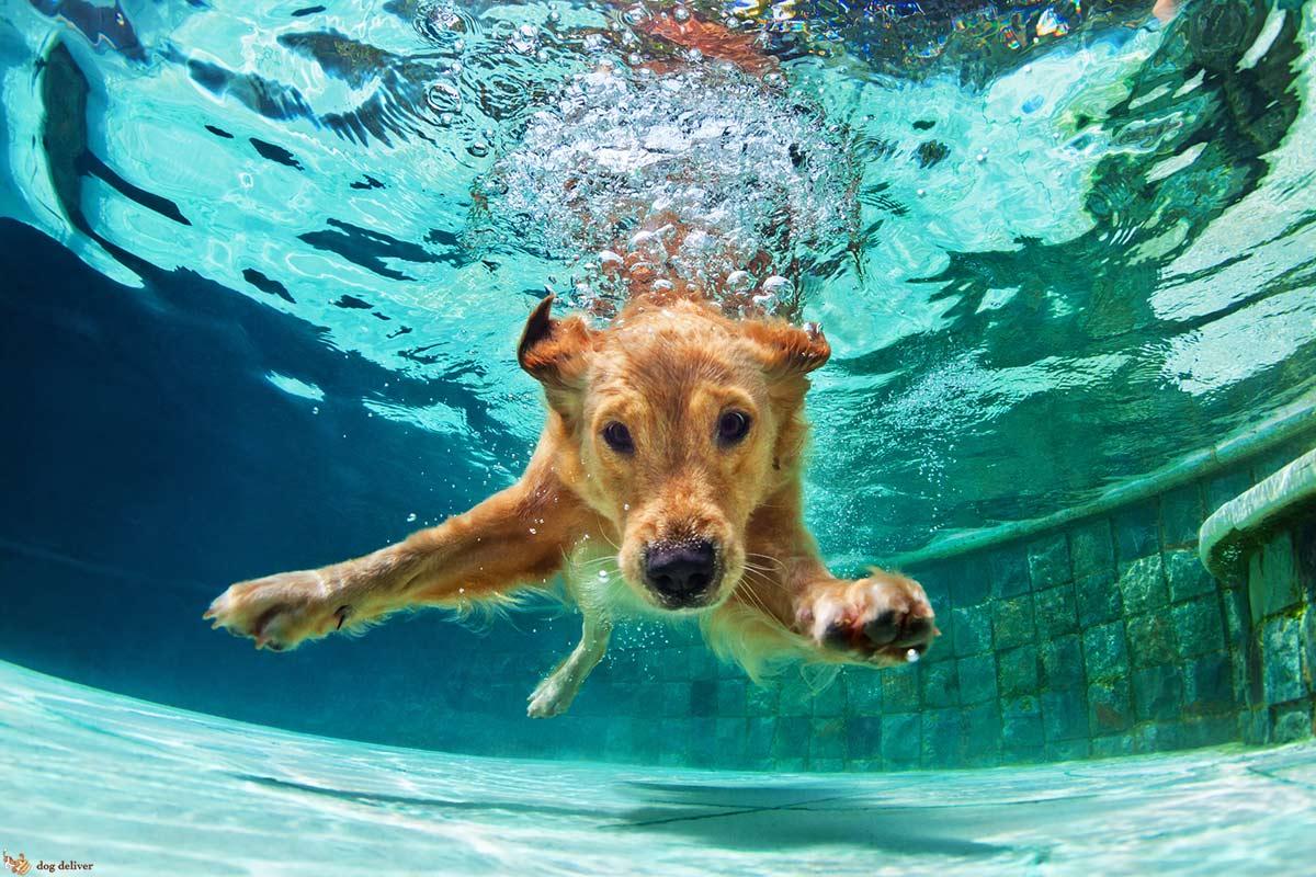 I cani sanno nuotare?